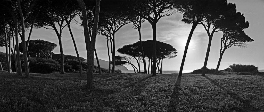 Populonia Pines